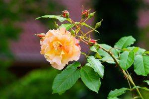 flower-1485334_640